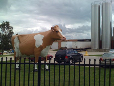 They have really big cows here in Wisconsin