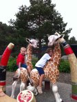Giraffe riding at the park