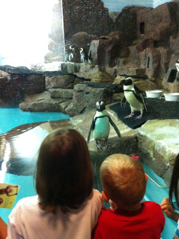 Penguin staring contest