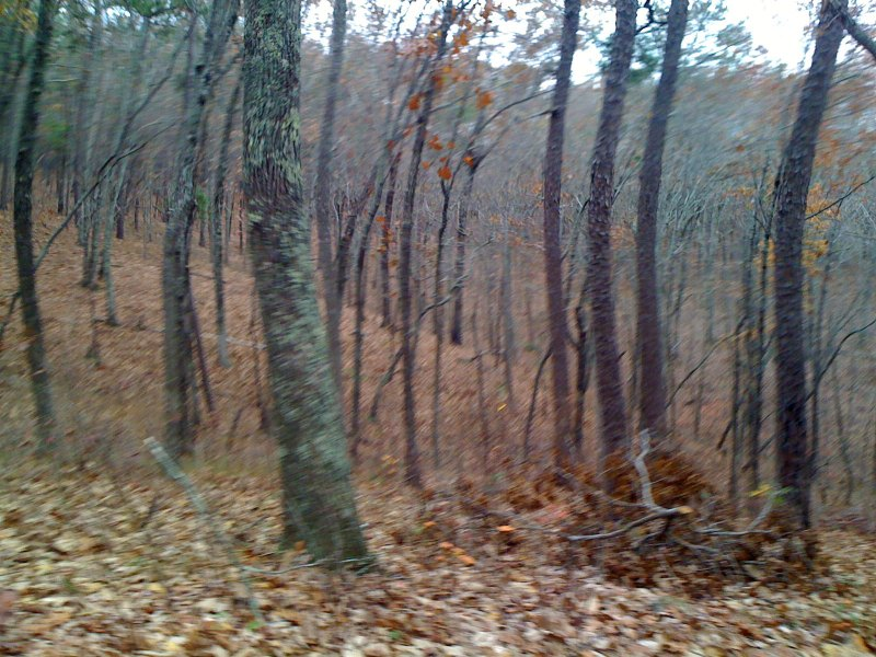 iphone pictures while moving can create some interesting effects on trees