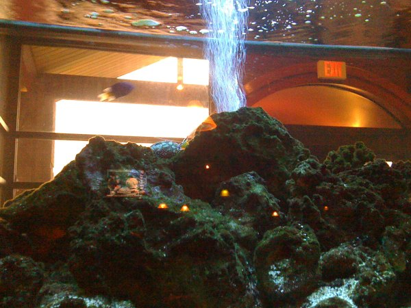 Fuji steakhouse our table bordered Mount Haukalugi (finding nemo)