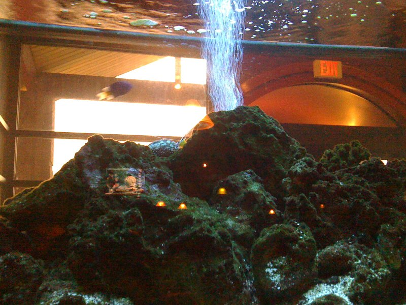 Fuji steakhouse our table bordered Mount Haukalugi (finding nemo)