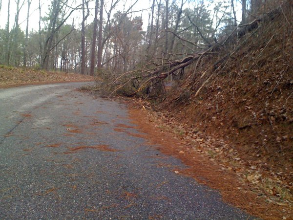 Road debris on the Lake Chinnabee road