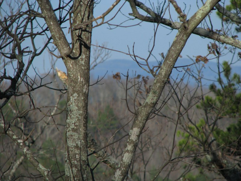 Zoomed in on the high point of Mount Cheaha - just to the right of the main tree trunk in this picture