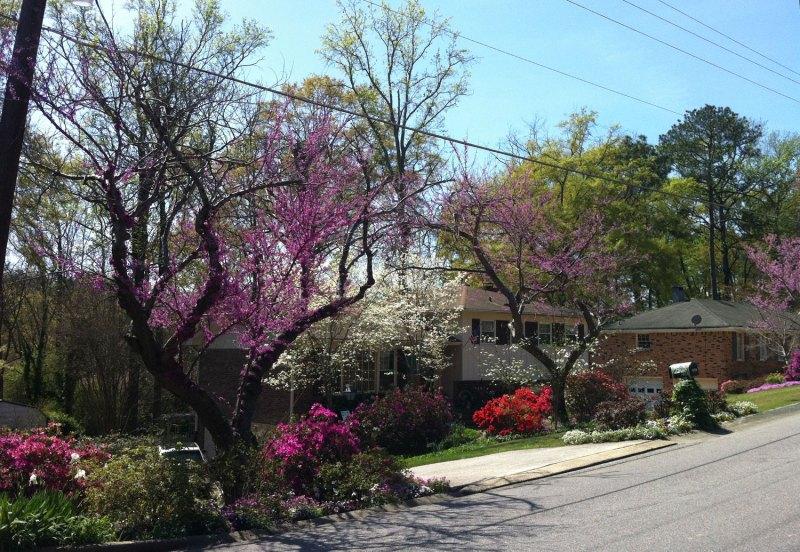 redbuds, azaleas, and a couple dogwoods