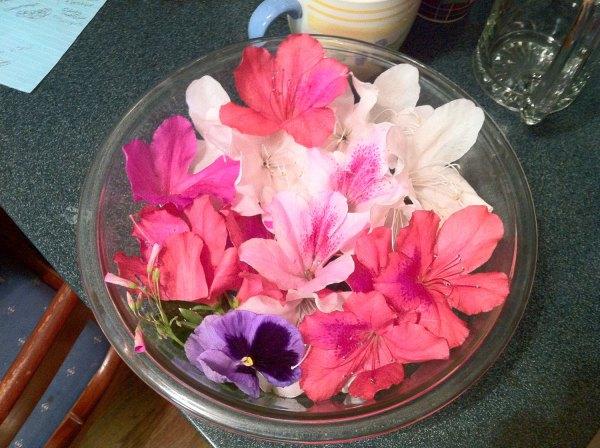 azalea bowl from grandmas front yard
