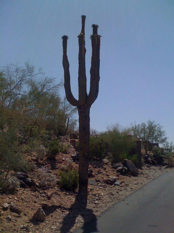 A cartoon cactus