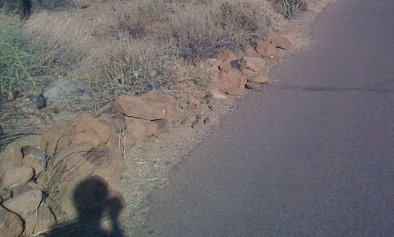 Mama road runner (far left) plus baby road runners (center) scurrying across the road in front of us.