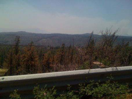 Day 17 - large burned area from a previous forest fire