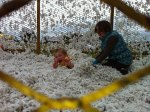 Josiah and Analise playing in a cotton truck.