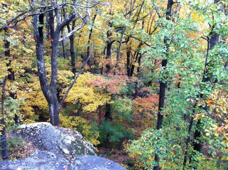 Landscape view of the trees off the edge of lover's leap
