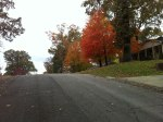 A view of the beautiful orange and yellow trees at the top of the Laurel View mini-monster (18% climb)