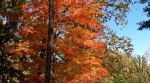 Zoomed in closer view of the bright orange colors of the tree at the turn onto Smyer