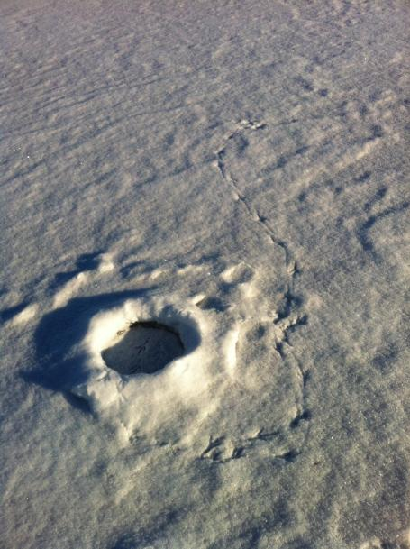 Eagle tracks around and inside ice fishing hole