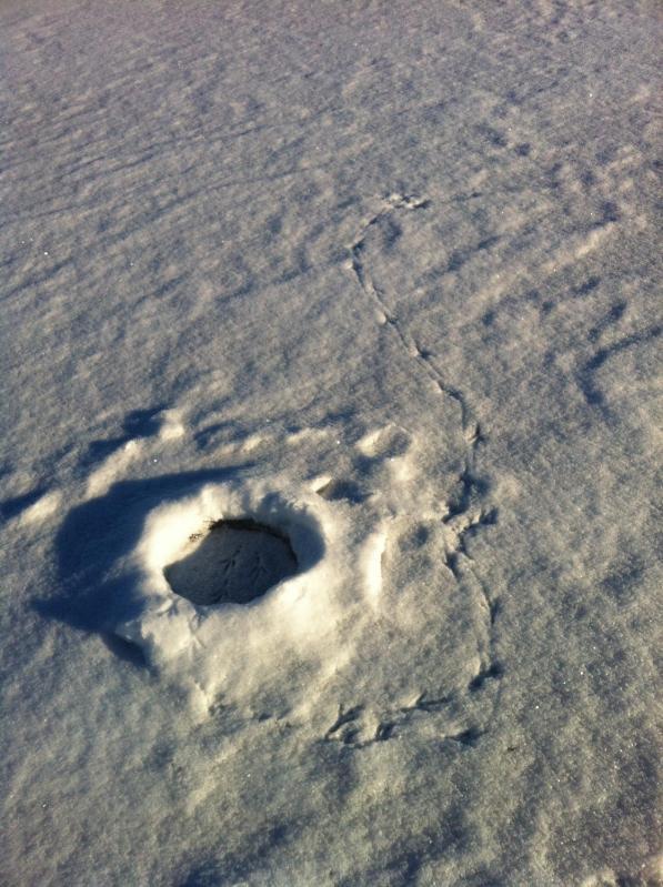 Eagle tracks around and inside ice fishing hole