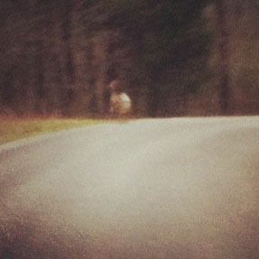 The slowest of the herd of white-tailed deer to run away when I approached.