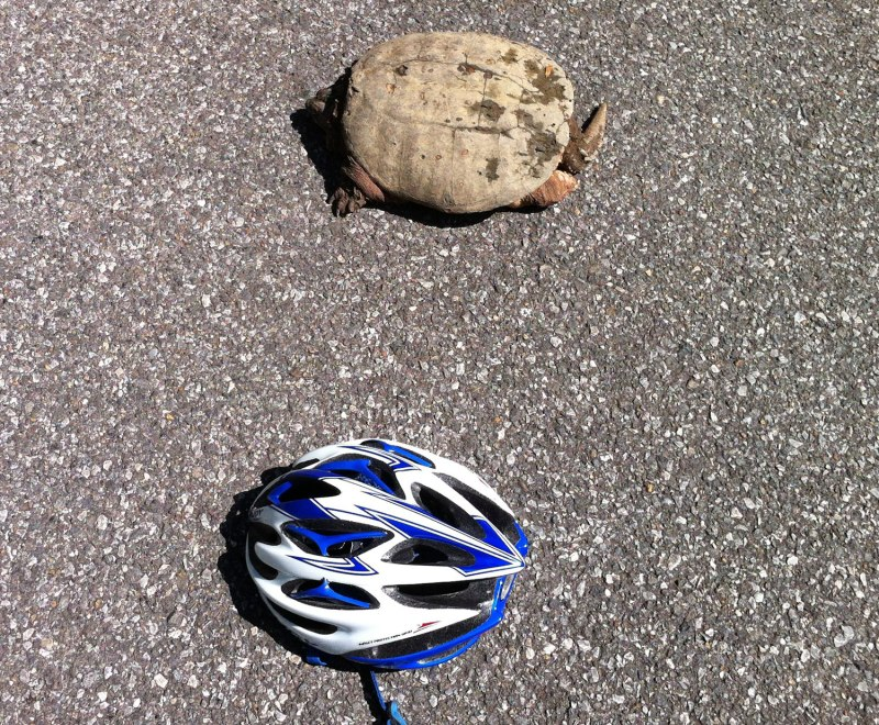This is as close as I was willing to put my helmet next to the turtle -- wanting to keep all my fingers when I was letting go or trying to pick up the helmet.