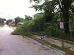 More storm damage from Saturday's storm - near the crit course during my warmup