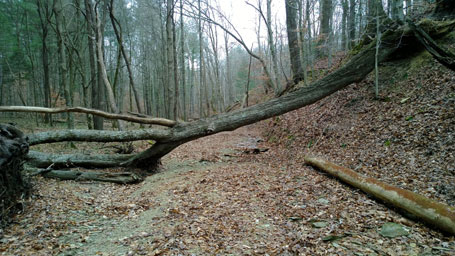 Trail goes under this tree - rideable but watch out of the standing water just on the other side of the log