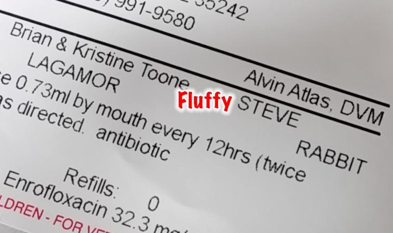 Fluffy Steve Toone rabbit.