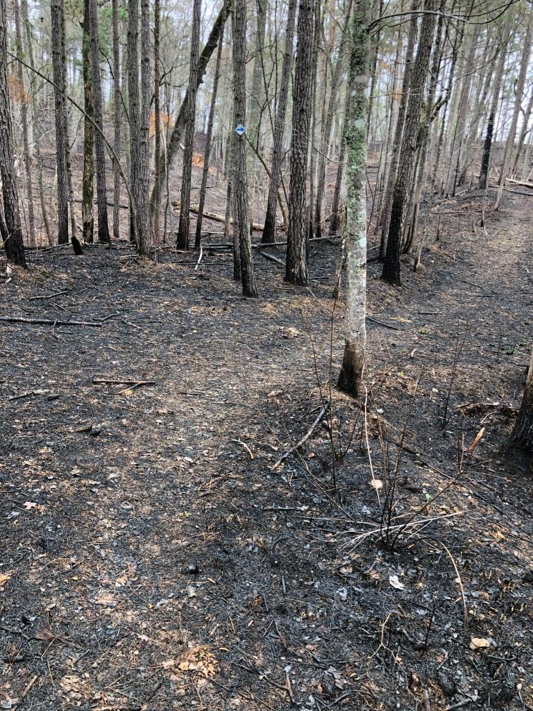 controlled burn blue trail